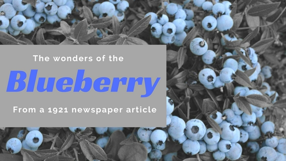A 1922 Newspaper Article On Wild Blueberries