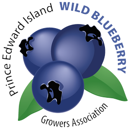 PEI Wild Blueberries