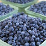 Why Fresh Wild Blueberries Can Be Hard To Find