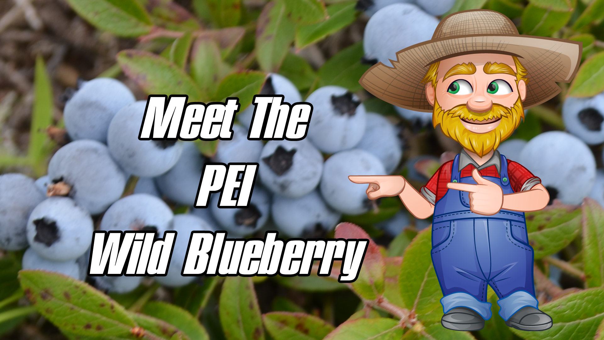 Meet The PEI Wild Blueberry