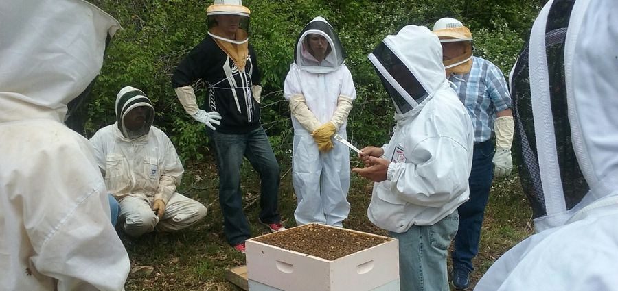 Province Looks To Increase Pollination