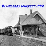 Blueberry Harvest 1952
