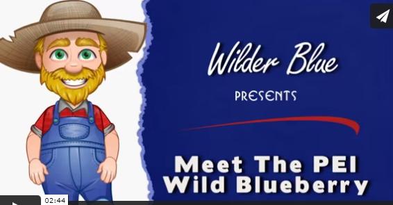 Meet The PEI Wild Blueberry